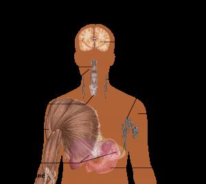 Главные симптомы острой ВИЧ-инфекции