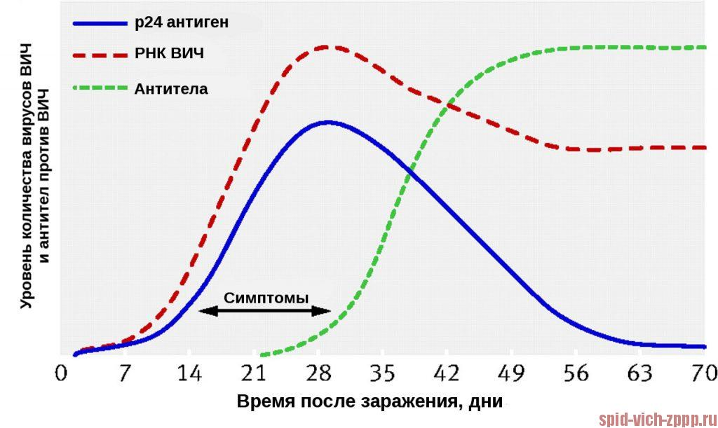 """График. Динамика появления маркеров ВИЧ, """"период окна""""."""